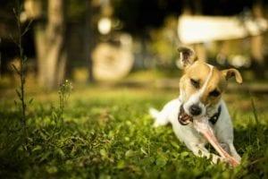 dog in grass